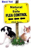 Flea Free, flea prevention, flea control, fleas and ticks, natural flea and tick control, all natural flea prevention