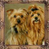 Giorgio and Gucci, Yorkshire Terrier