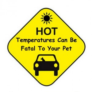 Hot Temperatures Can Be Fatal To Pets