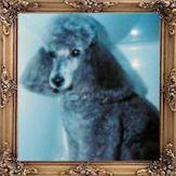 Kato, Silver Miniature Poodle